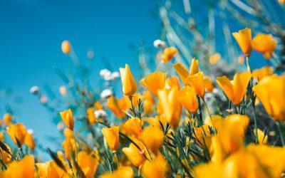 Newsletter – Spring News 2020