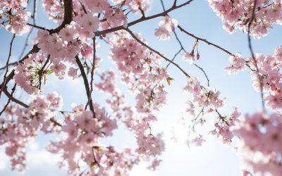 Newsletter – Spring News 2021
