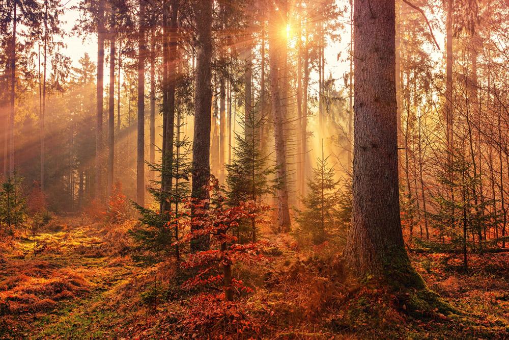Newsletter – Autumn 2021